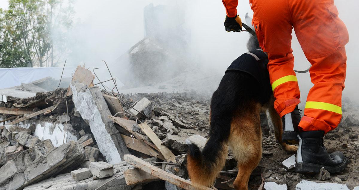 Firefighter walks through rubble with German shepherd