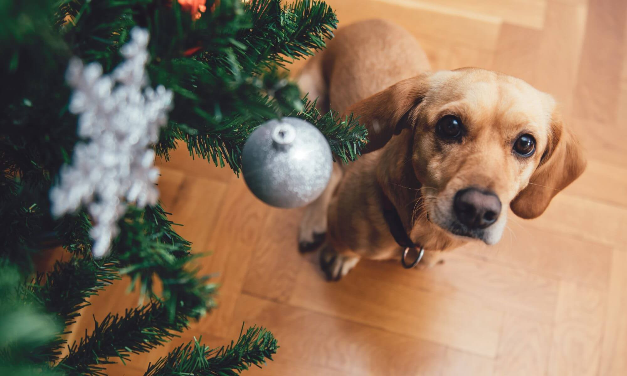 9 Christmas Tree Pet Safety Tips