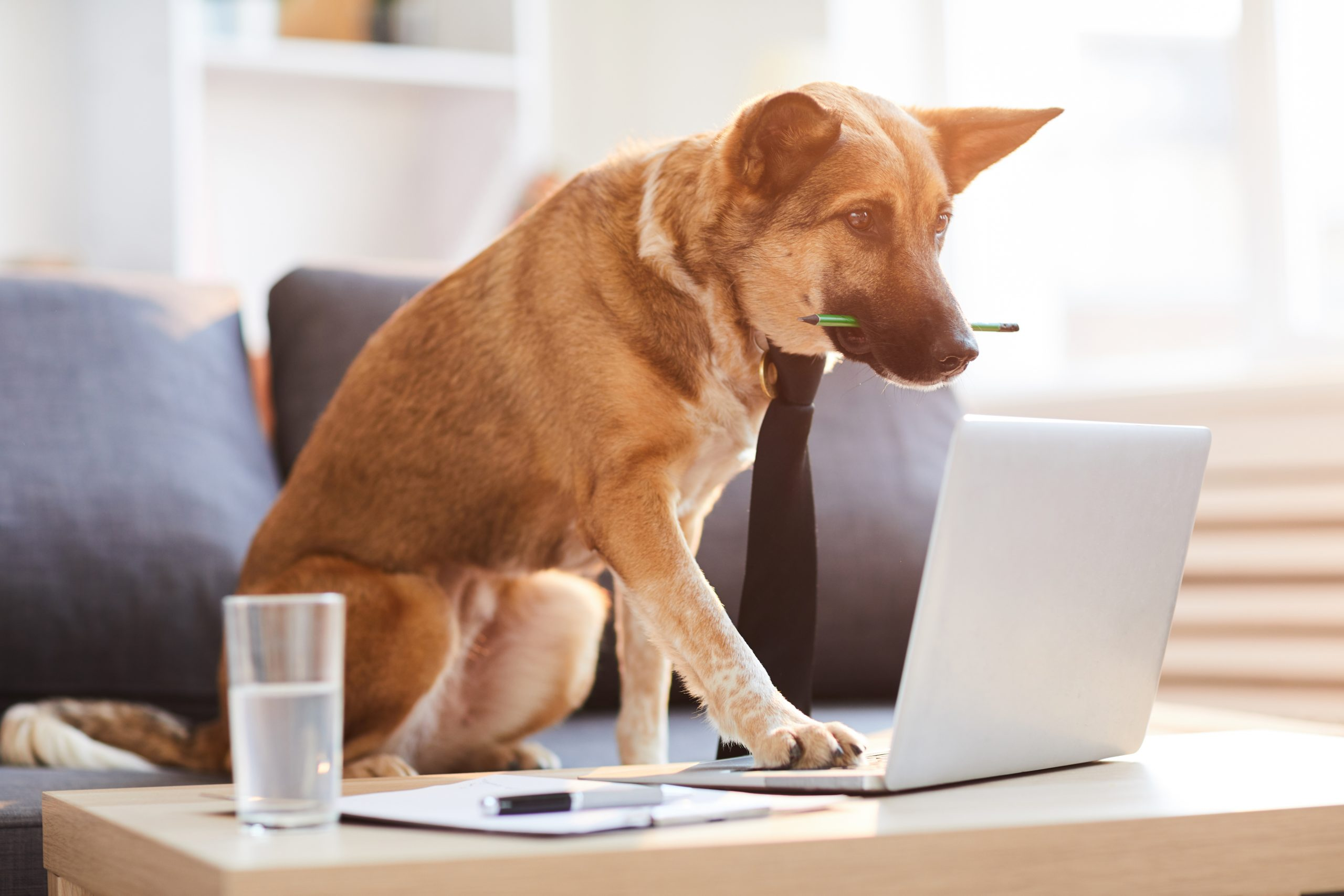 7 Tips for Working from Home with Your Dog